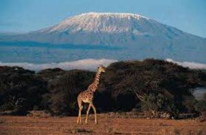 Une aventure inoubliable au cœur de la beauté sauvage de l'Afrique